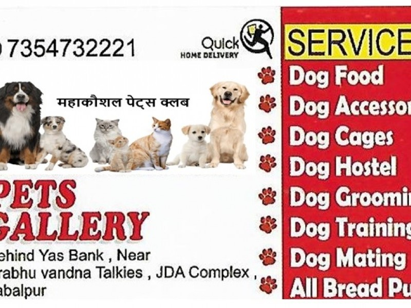 PETS GALLARY FOR DOGS AND KITTENS