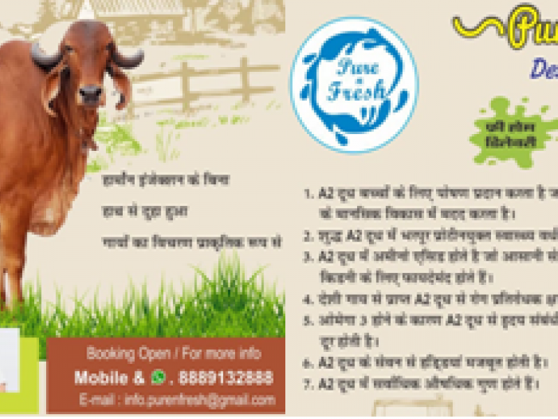 PURE N FRESH DAIRY PRODUCT AT YOUR DOOR STEP 8889132888,7987666014